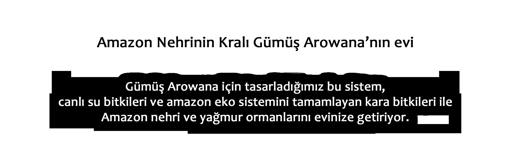 amazon_metin