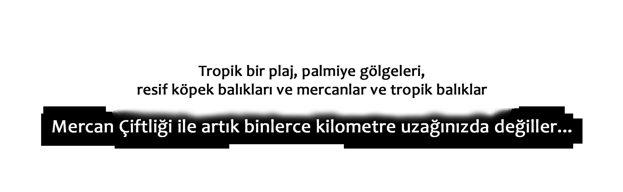 balik_metin