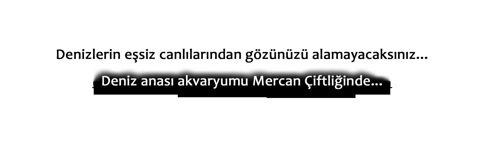 denizanasi_metin