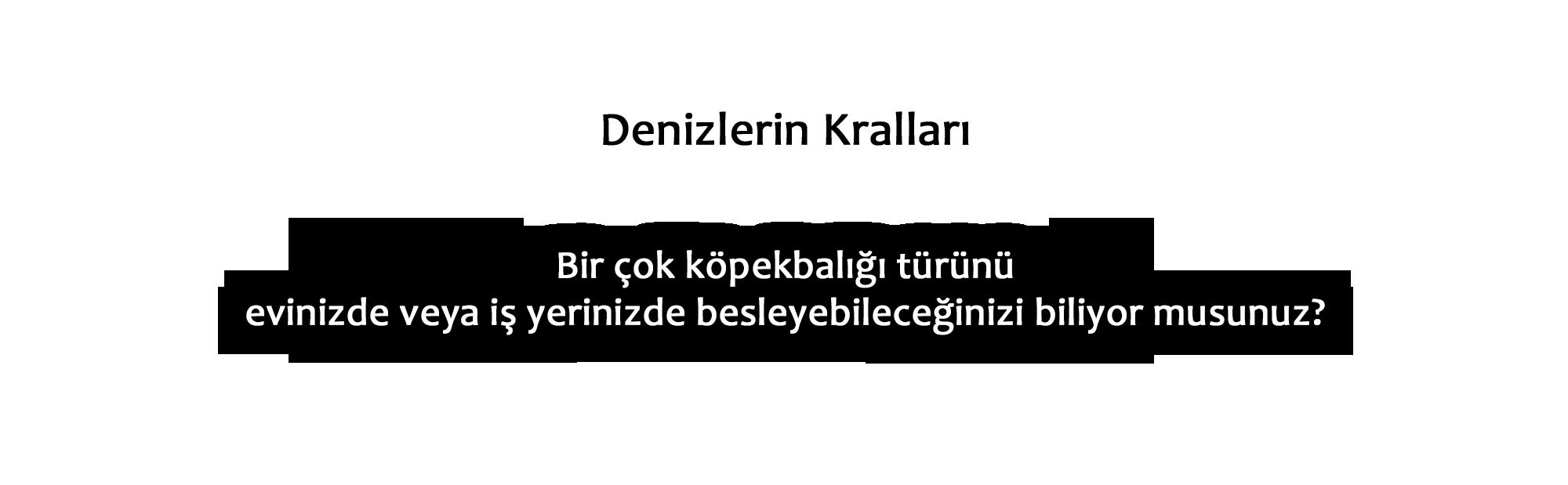 kopek_metin