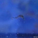 seahorse04