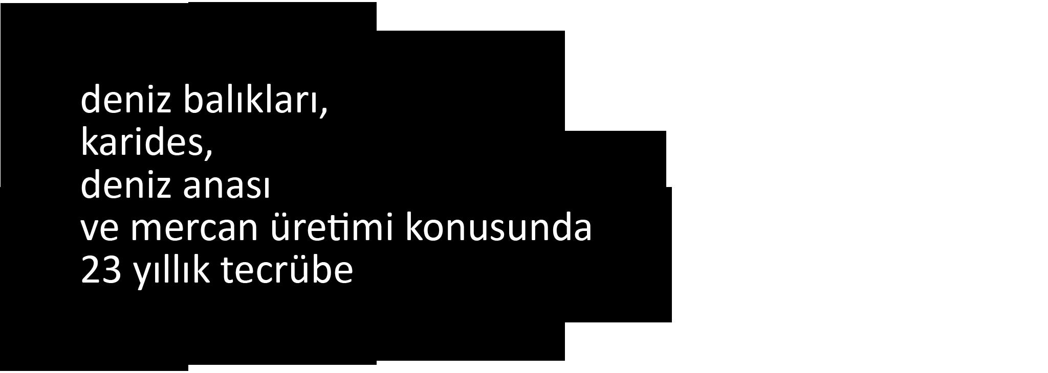 uretim_sf-metin